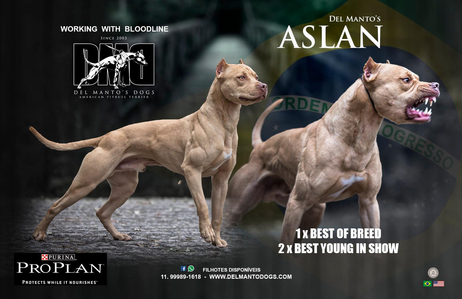 ff28f3524f American Pit Bull Terrier