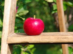 Apples for Dennis Wichelns 020