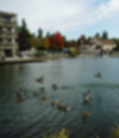 Ducks on Oswego Lake