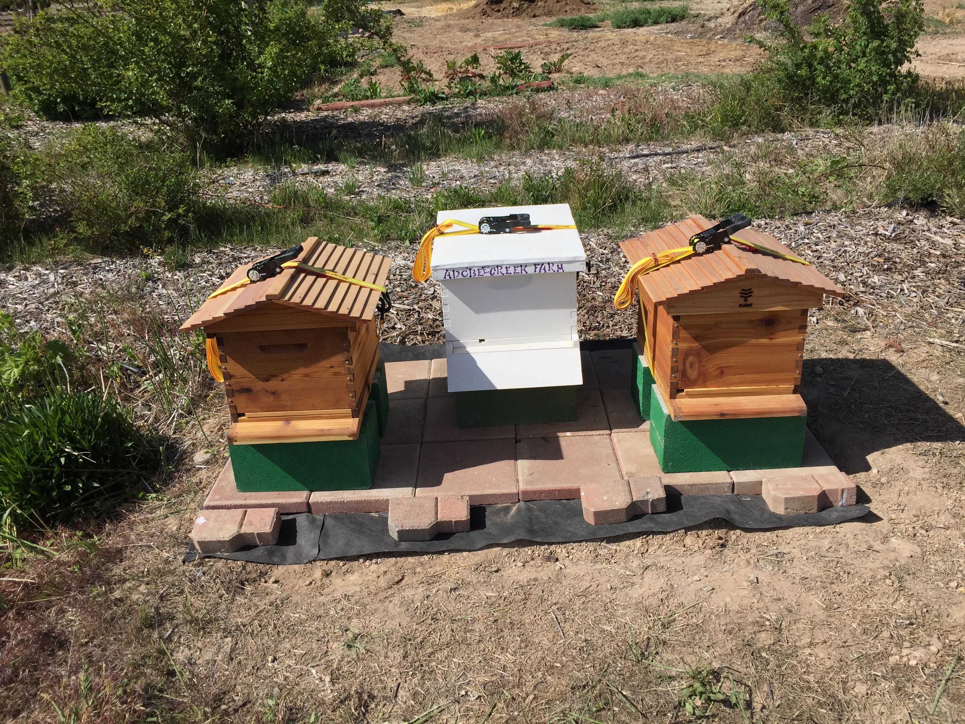 Adobe Creek Farm Apiary