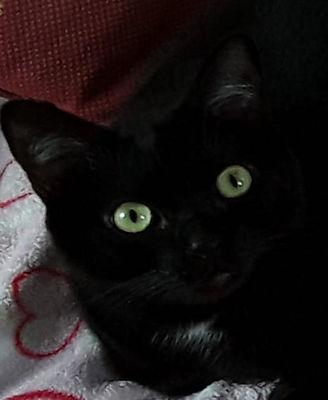 AUJOURD'HUI CEST LA JOURNÉE DE MON TENNESSEE 🐈🐈 parce que c'est la journée de tous les chats noirs
