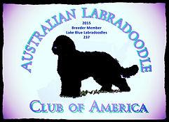 Labradoodles, labradoodle puppies, NC, Lake Blue Labradoodles