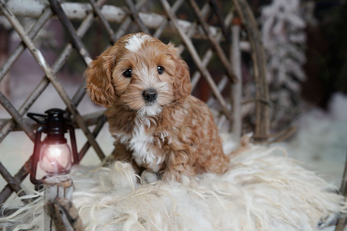 Savannah Puppy 1.jpg