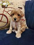 cheyenne pups4.jpg