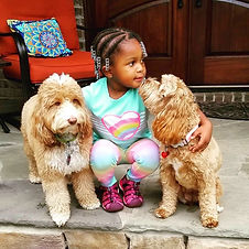 Lake blue Labradoodles Brylee with her pups