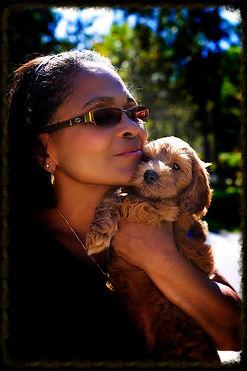 Labradoodle puppies, puppies, NC labradoodles, labradoodle breeders