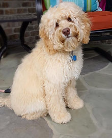 A picture of Tucker looking like he needs a hair cut.