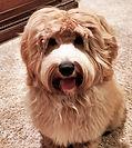 Bailey2.jpg