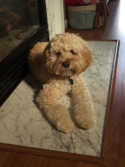 A picture of Tucker in front of the fireplace.