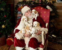 Stormie puppies ith Santa