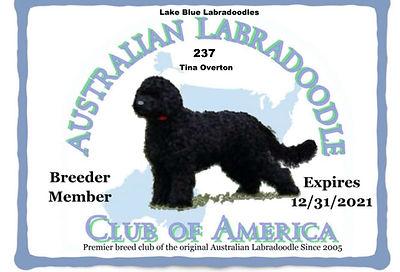 237 Lake Blue  Labradoodles __ Tina Over