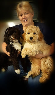 This is a picture of Chris, the dog trainer holding two of the puppies being trained at lake Blue Australian Labradoodles.Female trainer holding two pups