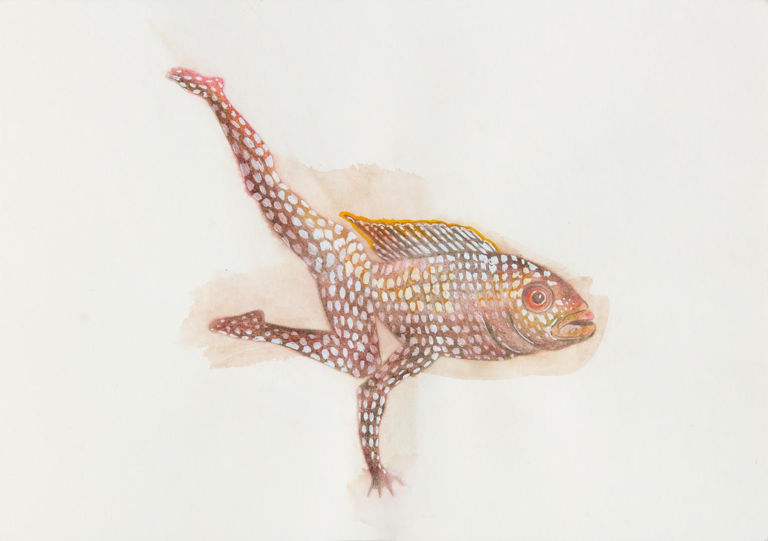 queria ser um peixe 8