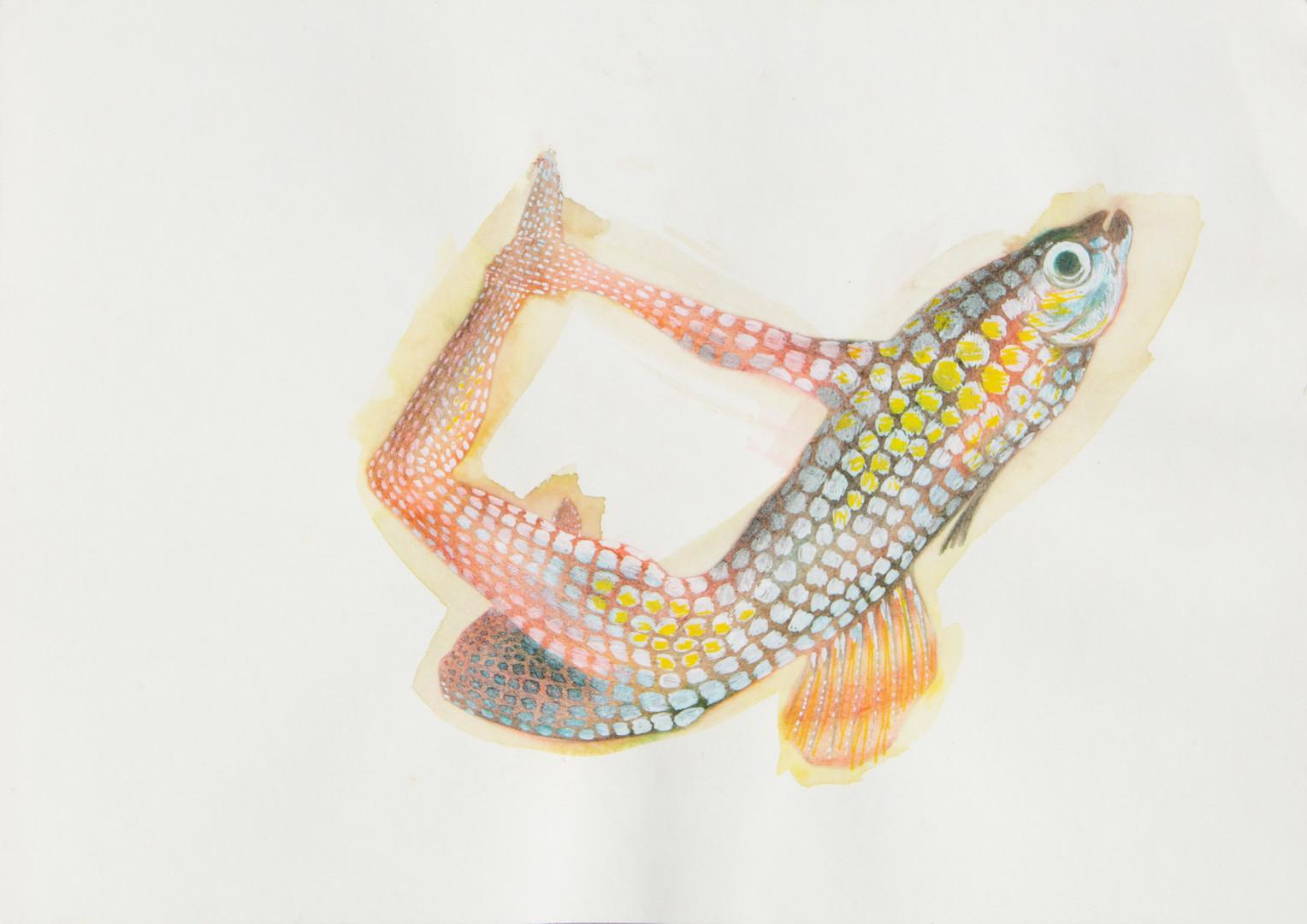 queria ser um peixe 4