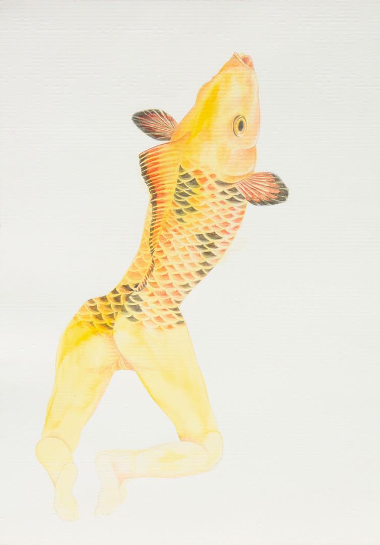 queria ser um peixe 13