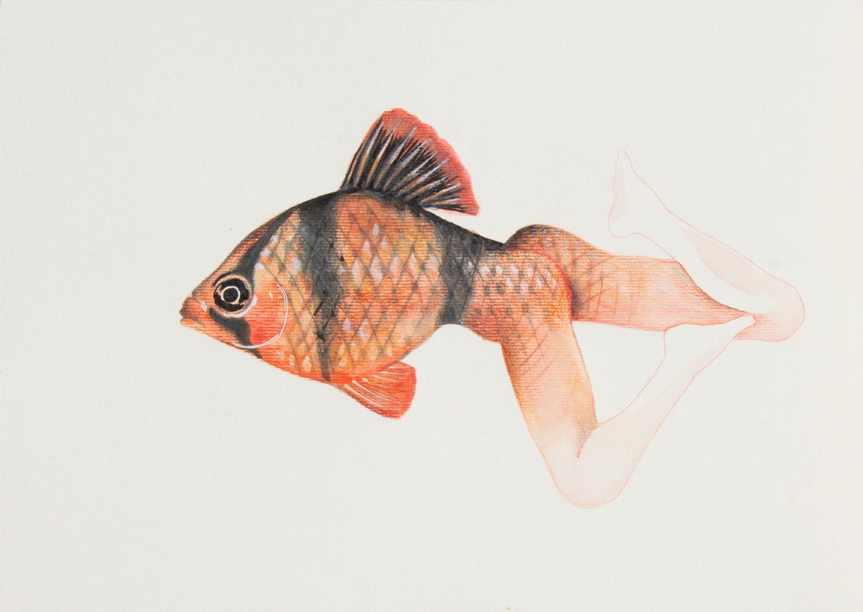 queria ser um peixe 6