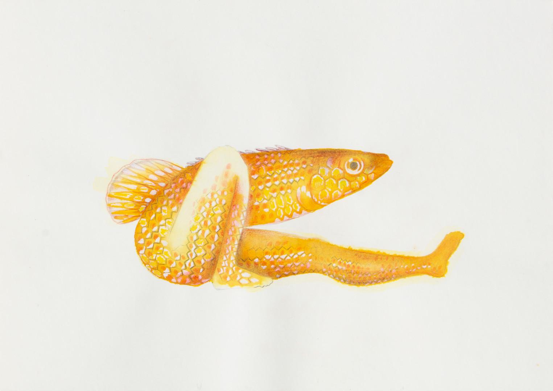 queria ser um peixe 3