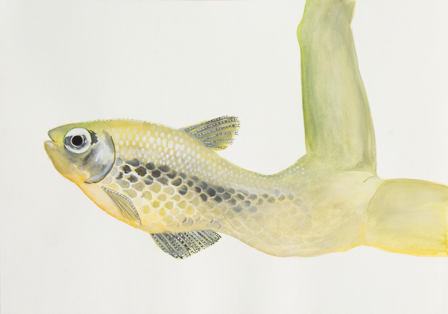 queria ser um peixe 1