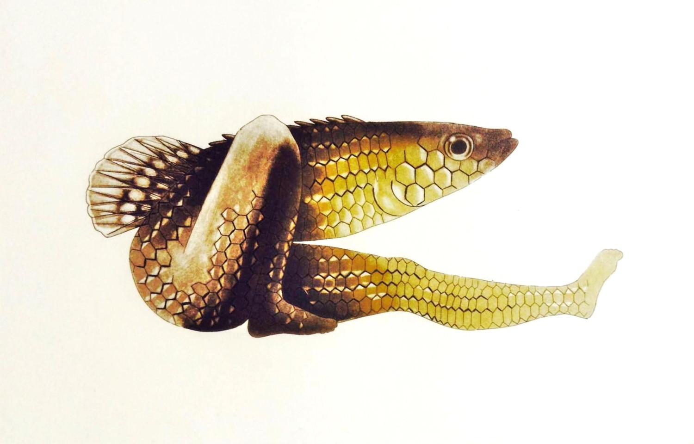 Peixe 3