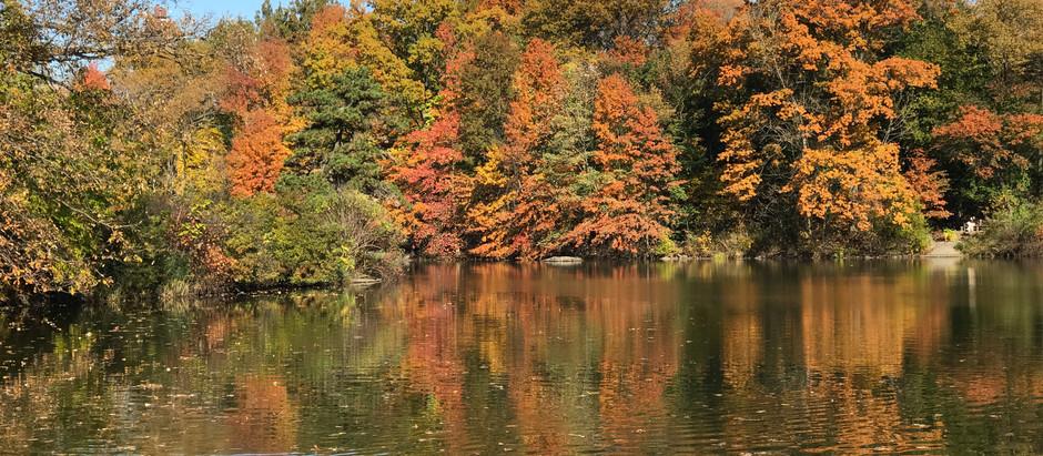A Transformação - Outono em Nova Iorque