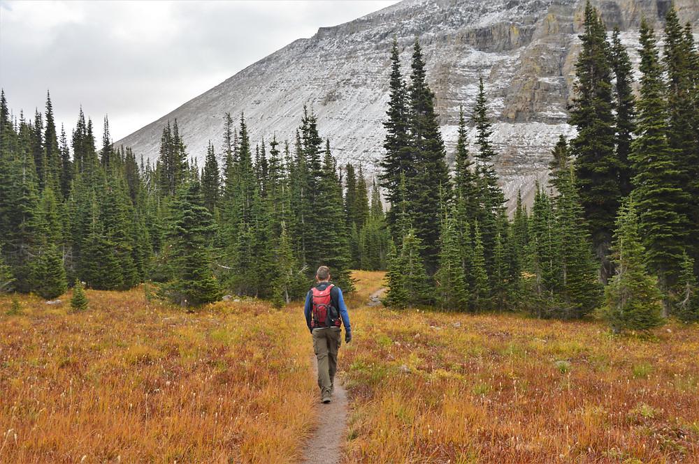 hiking siyeh pass trail hike glacier national park, alpine meadow