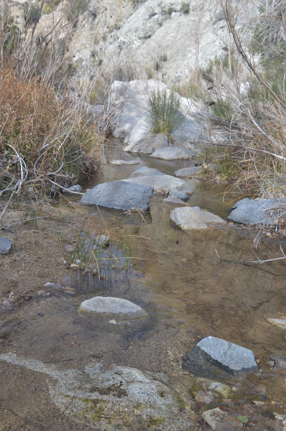 Horsethief Creek in the Santa Rosa Wilderness