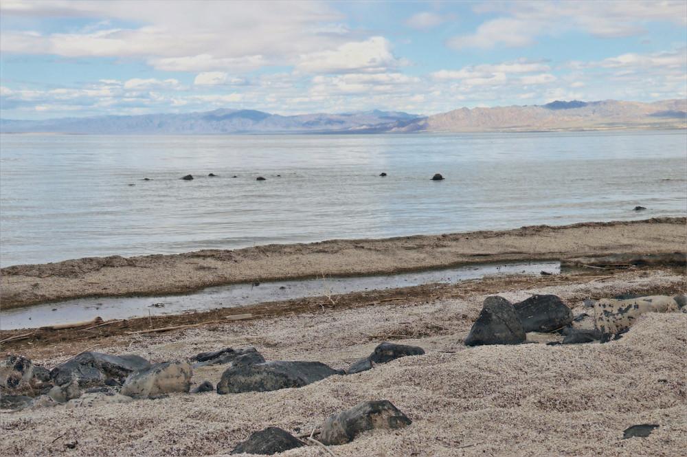 Salton Sea beach along Obsidian Butte
