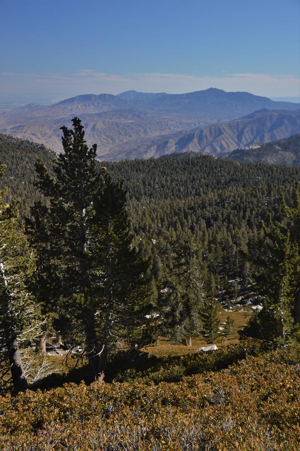 San Jacinto and Santa Rosa Mountains ranges from the San Jacinto summit trail