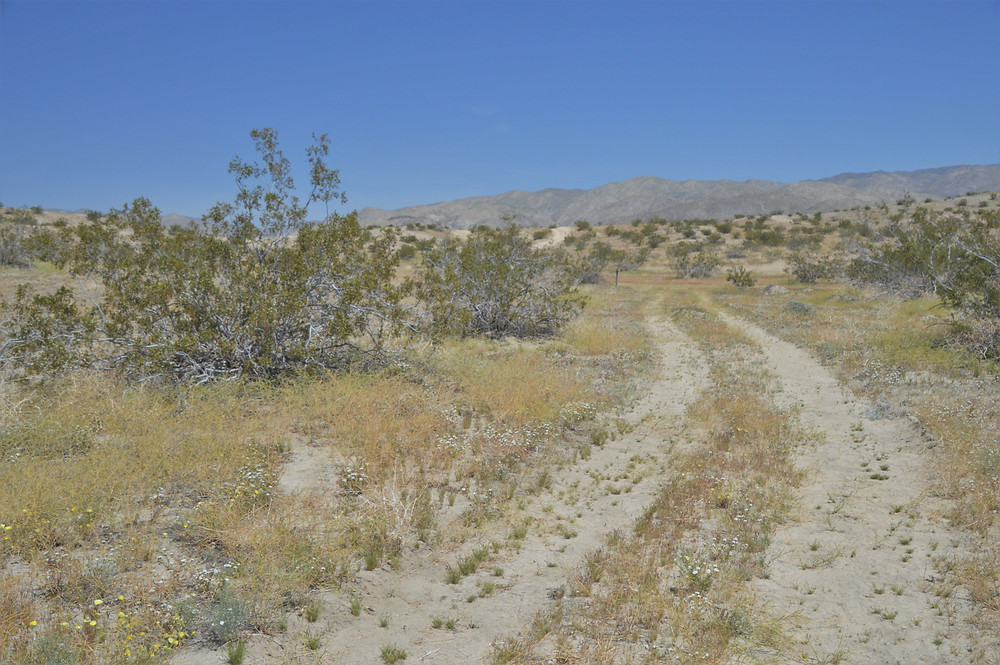 Kim Nichols trail in the Indio Hills