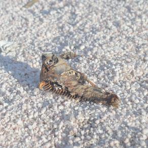 Salton Sea: (multiple visits)