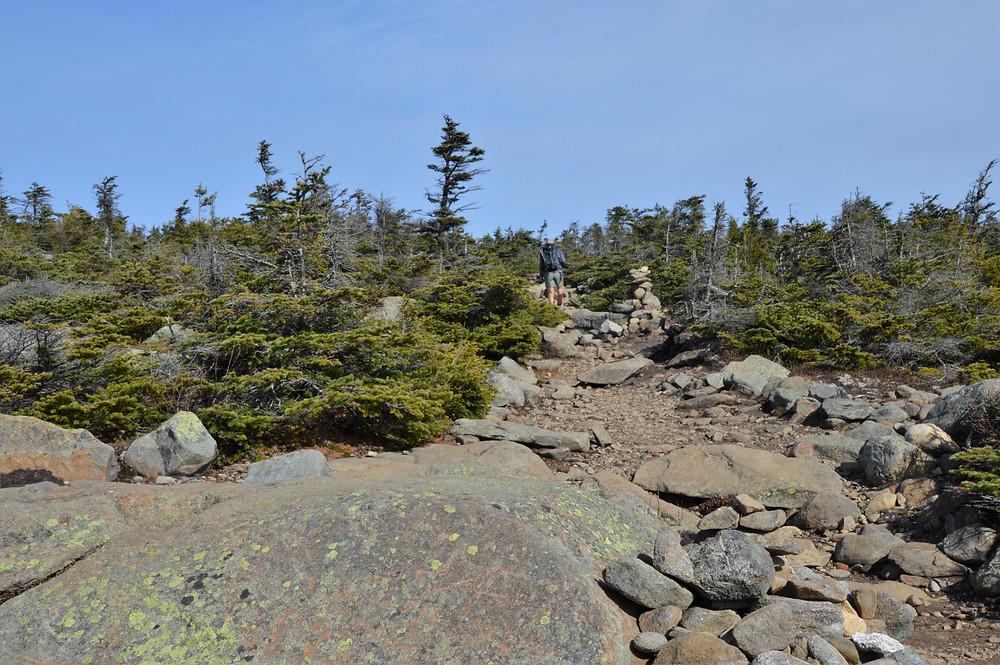 False summit on Gorge Brook trail leading to the Mt Moosilauke summit in NH. NH 4000 footer