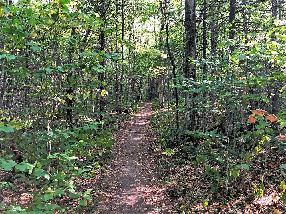 Mt Eisenhower via Edmands Path.