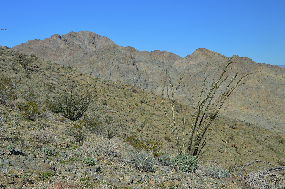 Foothills of the Santa Rosa Mountains at the start of the Bear Creek Oasis Trail in La Quinta Cove