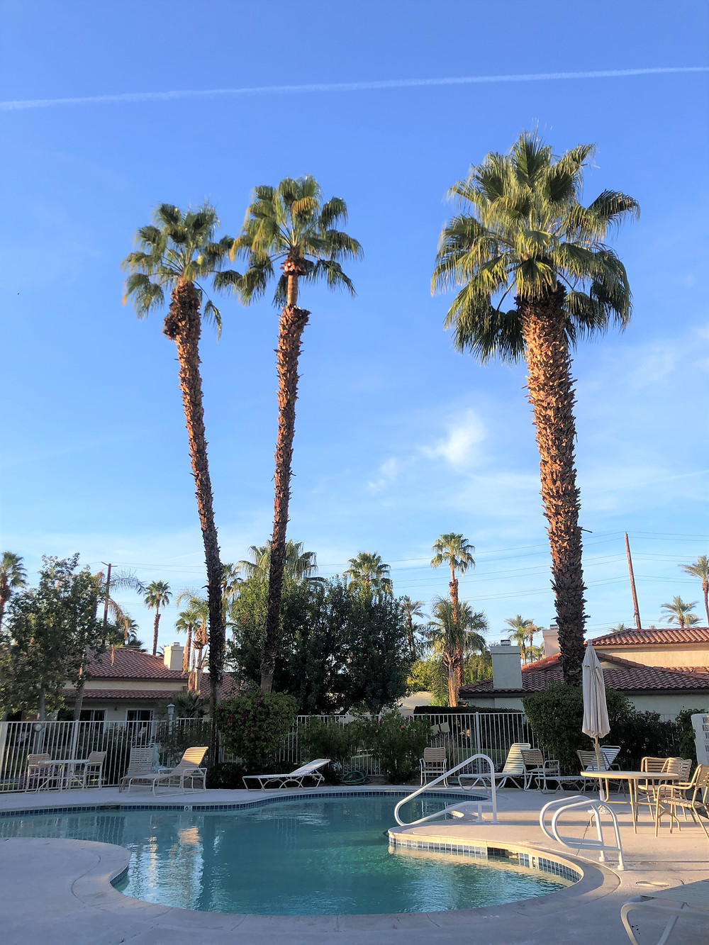 Palm tree and swimming pool in Palm Desert