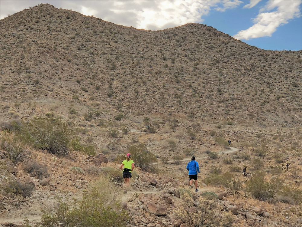 Runners in the Wildflower Festival 5k trail run and walk along the Randall Henderson Trail
