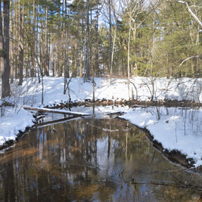 Walking Through Mine Falls Park, NH: Winter 2021