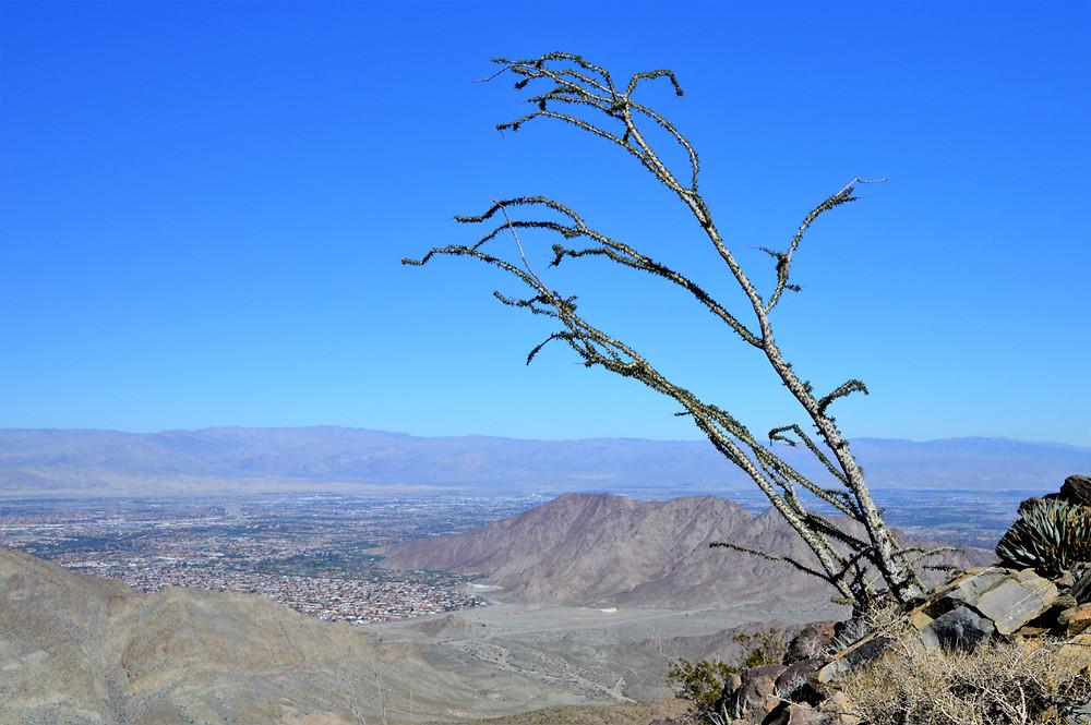 La Quinta Cove and Little San Bernardino Mountains from the Bear Creek Oasis Trail