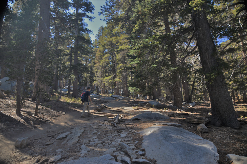 Forest trail leading to the summit of San Jacinto