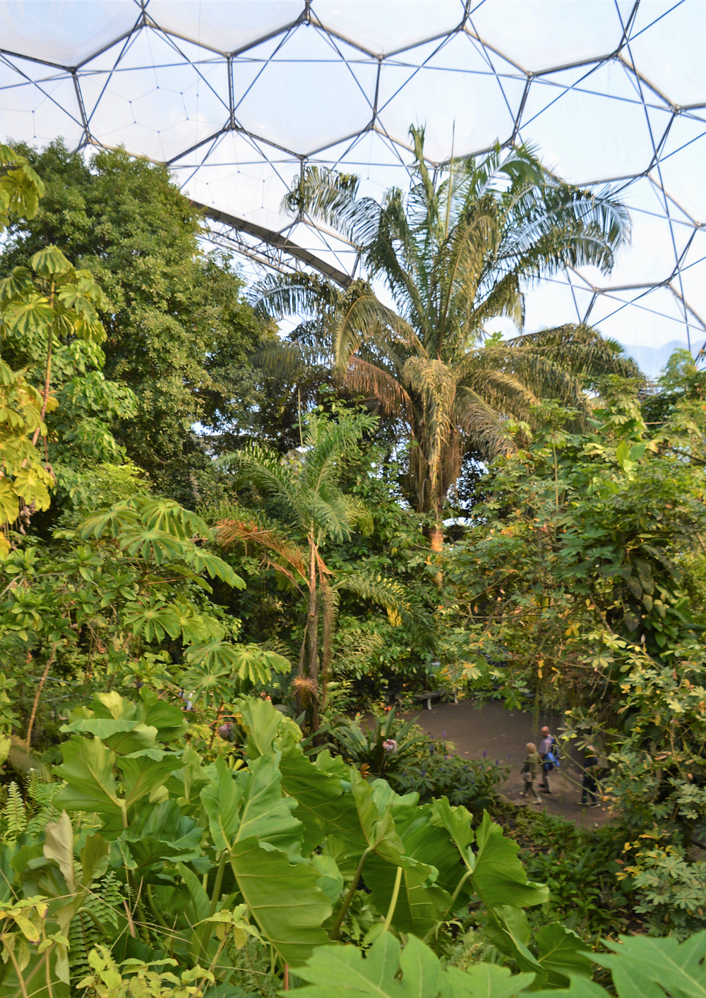 The Rainforest Biome in the Eden Project contains over 1,200 different species of plant from West