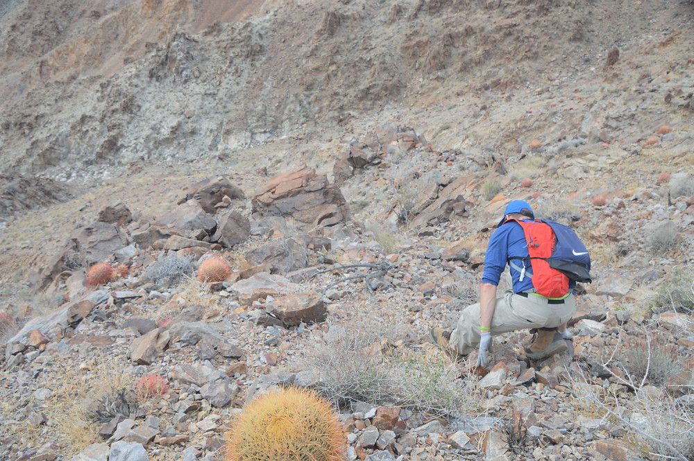 Scrambling down steep scree covered path leading from summit of Pinto Mountains in Joshua Tree