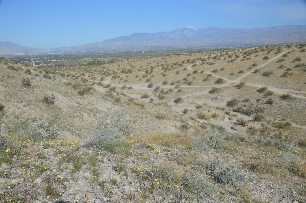Kim Nichols Trail in the Indio Hills  with San Gorgonio in the background