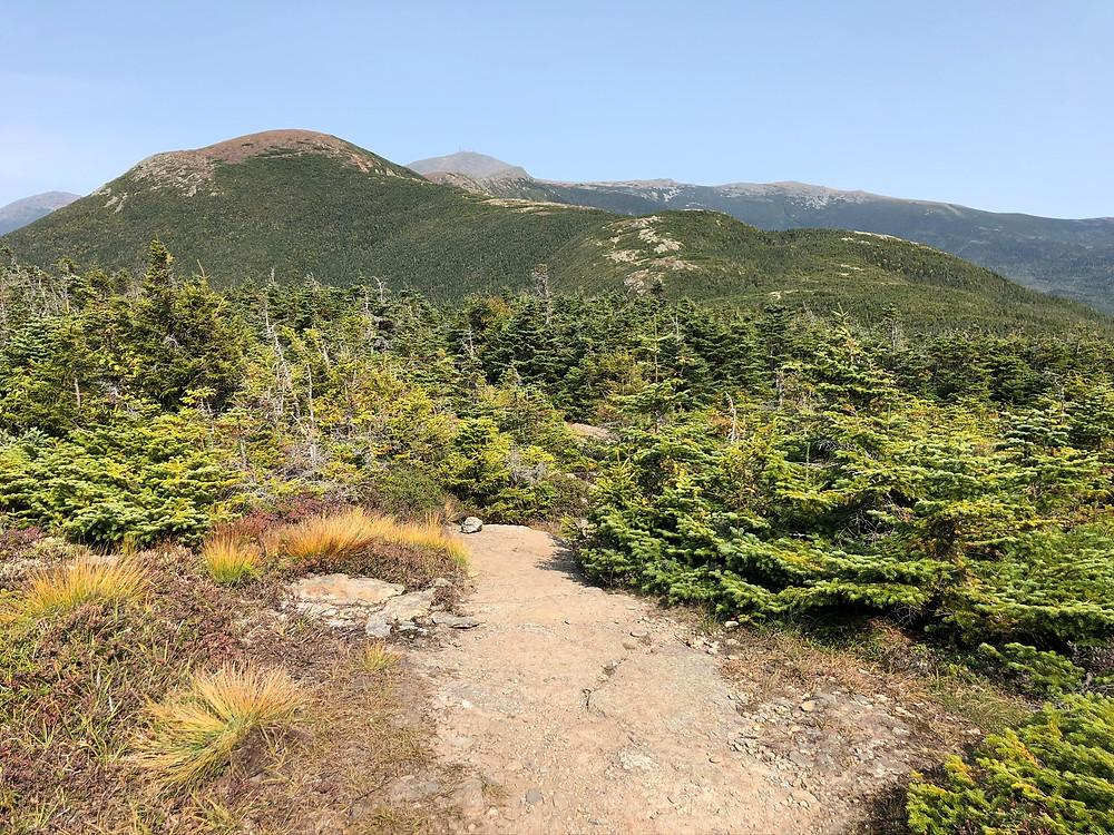 Trail leading to Mt Pierce summit