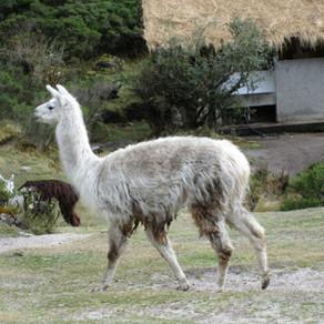 Inca Trail Day 2, Peru