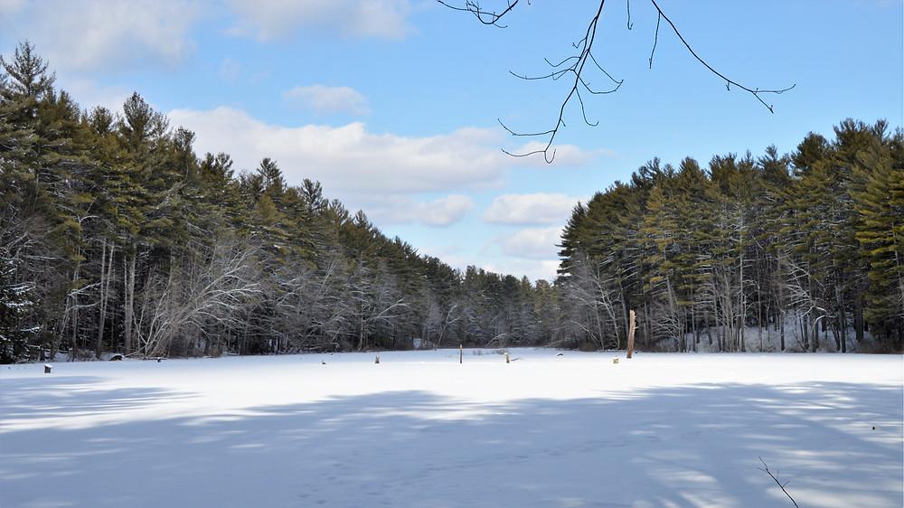 Spatterdock Pond in Beaver Brook in Hollis Conservation Lands New Hampshire