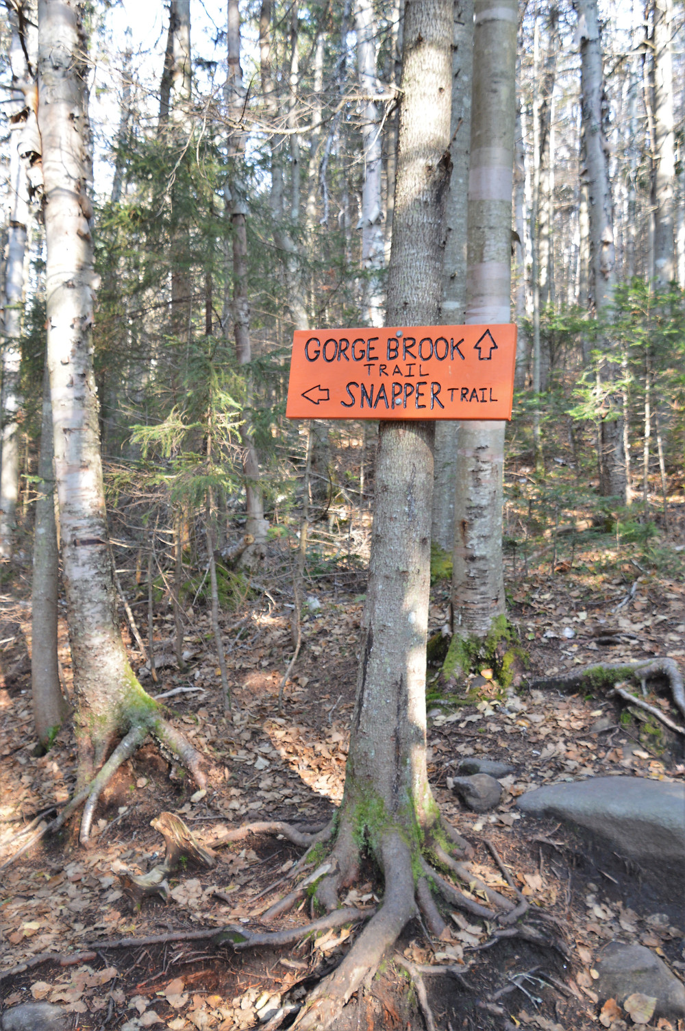 Trail marker for Gorge Brook Trail or Snapper Trail both lead to Mt Moosilauke summit in NH. NH 4000 footer