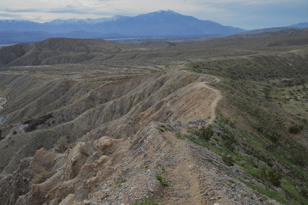 Hiking Pushawalla Palm trail during the 2019 Superbloom in Coachella Valley Preserve area