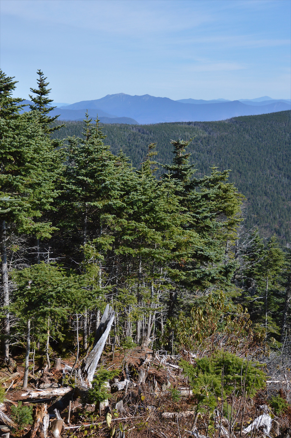 The sharp Franconia Range peaks were visible from the Gorge Brook trail leading to the Mt Moosilauke summit in NH. NH 4000 footer