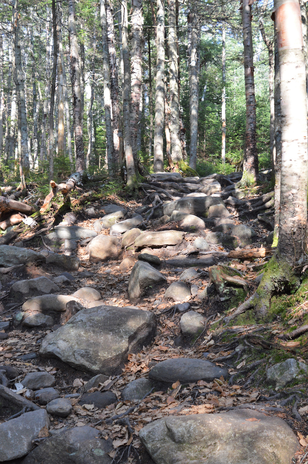 Rocks and roots lined the trail with signs of erosion