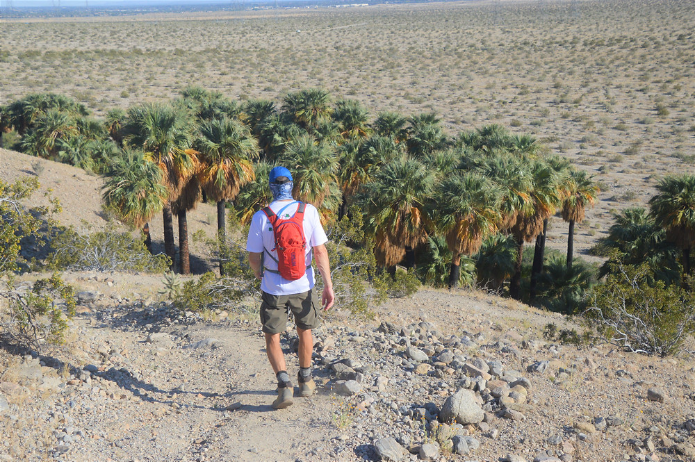 Hiking down to the Willis Palm Grove from Willis Palms Loop Trail- West Mesa Trail