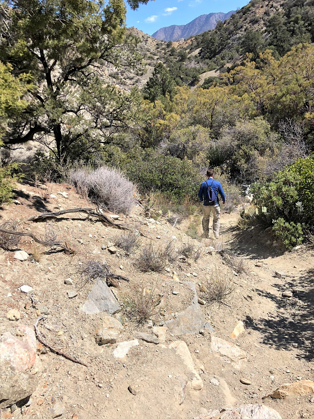 Hiking the Cactus Spring trail in the Santa Rosa Mountain Wilderness